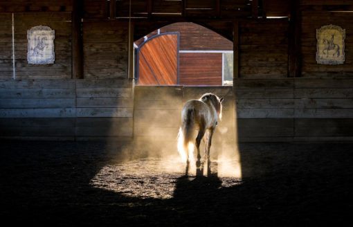 """""""LUSITANO: NOBLE, COURAGEOUS, ETERNAL"""" LIMITED EDITION TRADE PRESS BOOK"""